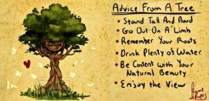 Bài học từ 1 cái cây