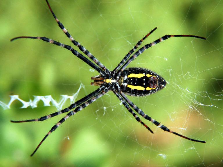 Con nhện ở miếu quan âm